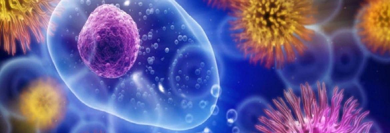 Сколько живут вирусы вне организма человека Чтобы уберечь себя от проникновения какого-либо вируса в организм, нужно знать их разновидности, и сколько времени они живут на поверхности различных предметов.Что вообще такое ВИРУС?ВИРУС (в переводе с латинского языка — «яд») — это неклеточный инфекционный агент, который может воспроизводиться только внутри живых клеток. Вирусы поражают все типы организмов, от растений и животных до бактерий.Вирусы являются самой примитивной формой жизни, состоящей из генетического материала ДНК или РНК, оформленного в белковую оболочкуСам по себе вирус не способен размножаться самостоятельно и не имеет собственного метаболизма. Для всего этого ему нужны клетки какого-либо организма.Попадая в организм, вирус прикрепляется к мембране чужой клетки. В зависимости от вида вируса, он может быть прикреплен либо к эпители слизистых оболочек (это например вирус гриппа), либо к нервной ткани (вирус простого герпеса), а вирус иммунодефицита человека – к иммунным клеткам.