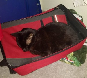 pack_me_too