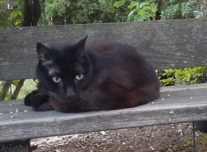patio_kitty