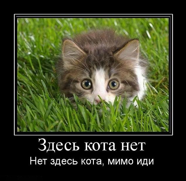 1297160517_zdes-kota-net