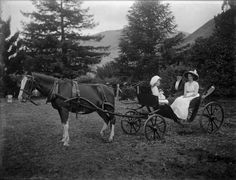 preston seely blog horse and buggy photo.jpg