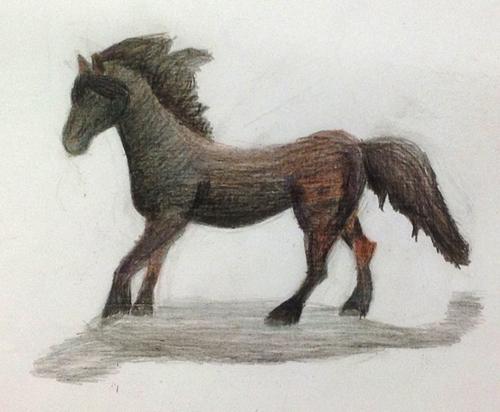 «Конь». Рисование с натуры. Цветные карандаши. Лада, 12 лет.