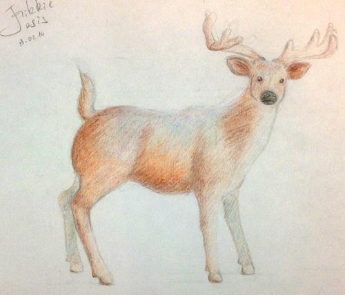 «Олень». Рисование с натуры. Цветные карандаши. Настя, 15 лет.