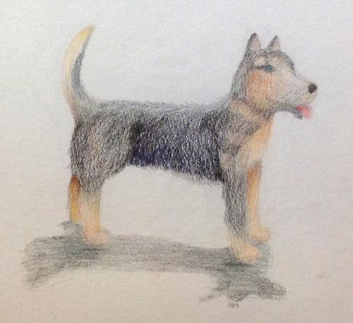 «Собака». Рисование с натуры. Цветные карандаши. Настя, 13 лет.