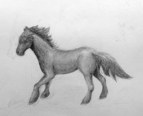 «Конь». Рисование с натуры. Простой карандаш. Даша, 14 лет.