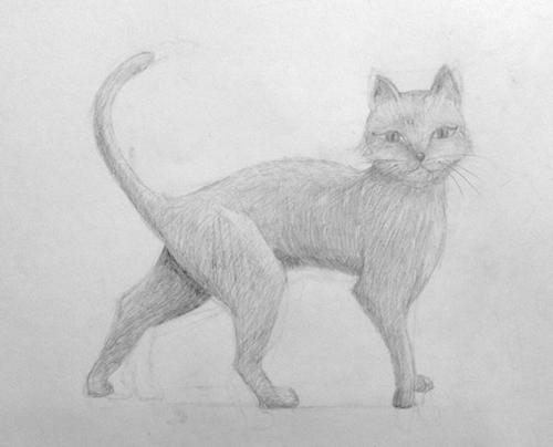 «Кот». Рисование с натуры. Простой карандаш. Полина, 14 лет.