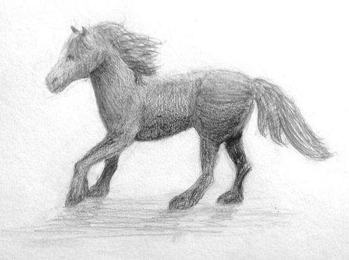 «Лошадь». Рисование с натуры. Простые карандаши. Женя, 13 лет.