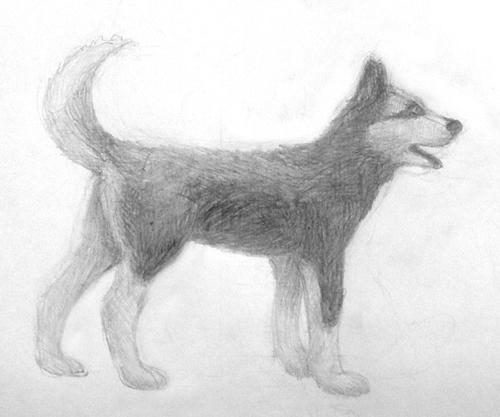 «Собака». Рисование с натуры. Простые карандаши. Даша, 14 лет.