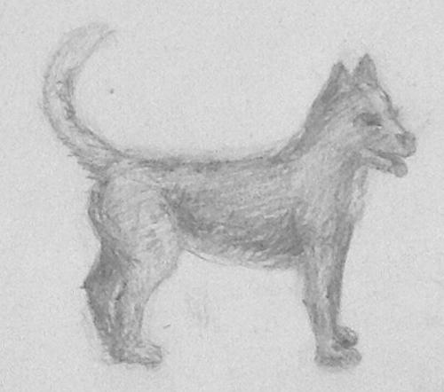 «Собака». Рисование с натуры. Простые карандаши. Катя, 13 лет.