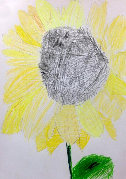 «Подсолнух». Рисование с натуры. Цветные карандаши. Агния, 5 лет.