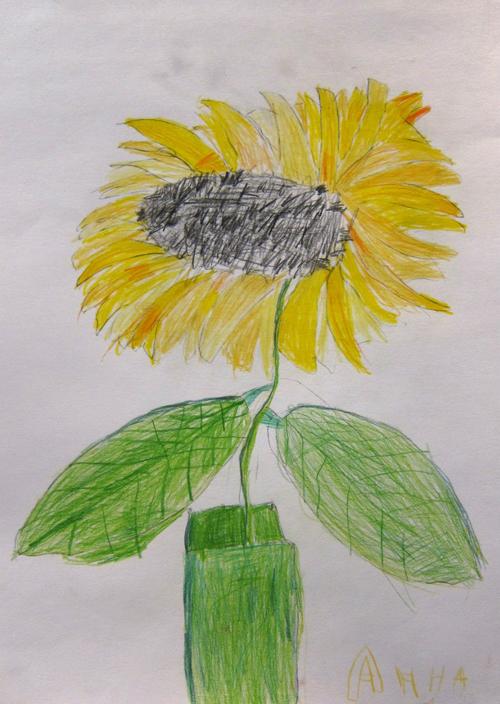 «Подсолнух». Рисование с натуры. Цветные карандаши. Аня, 5 лет.