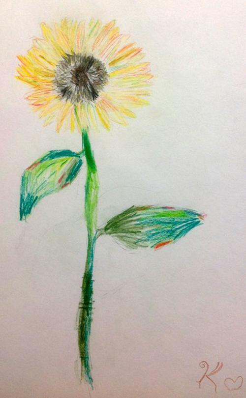 «Подсолнух». Рисование с натуры. Цветные карандаши. Ксения, 5 лет.