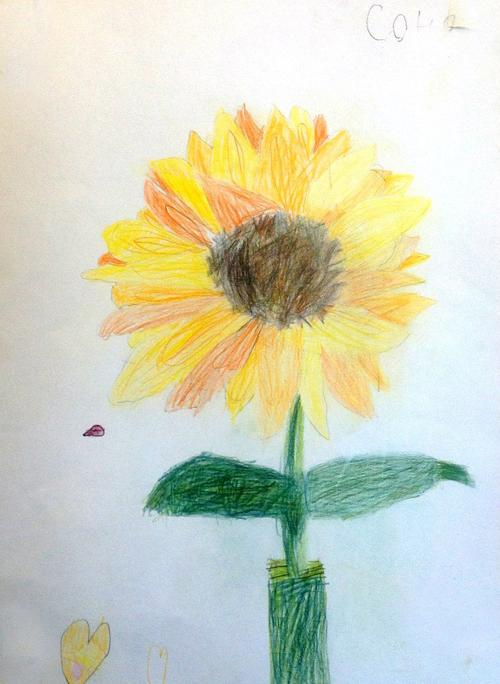«Подсолнух». Рисование с натуры. Цветные карандаши. Соня, 5 лет.