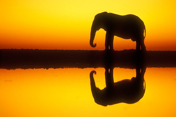 etosha_national_park_namibia08
