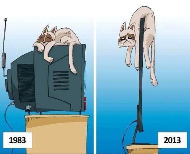кот-живность-телевизор-прогресс-888164