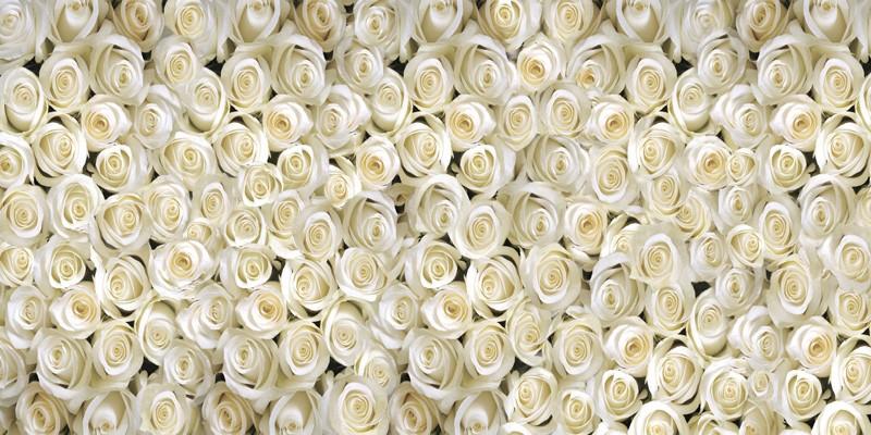 Фотообои белые розы фото