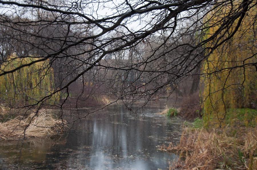 Осень, тлен, готика, Санкт-Петербург, Ботанический сад МГУ в Москве