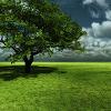 lotr icons tree 1
