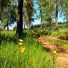 wilderness road 3