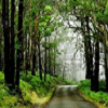 wilderness road 2
