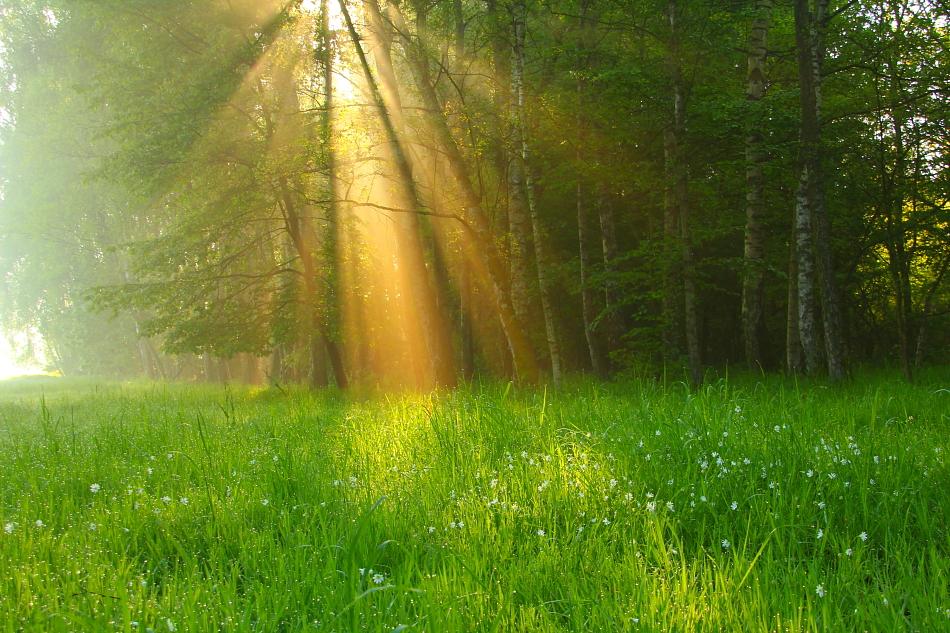 утро картинки красивые