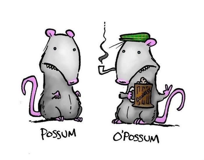 possum-o_possum