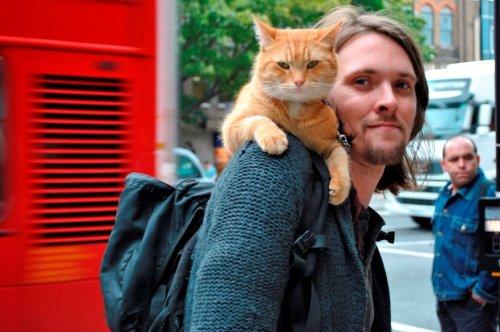 1352387706_street-cat-named-bob-0