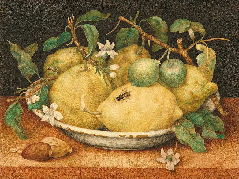 осы-на-лимоне
