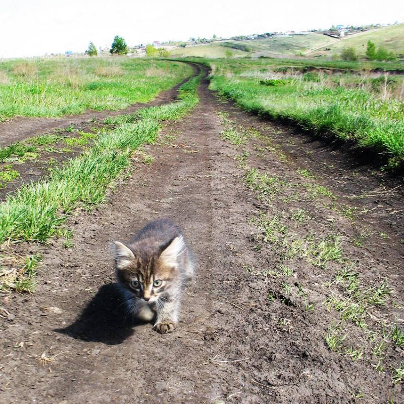 9. Котенок бежит на Черную сопку.