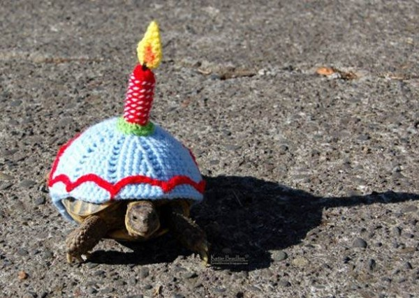Birthday Turtle.jpg