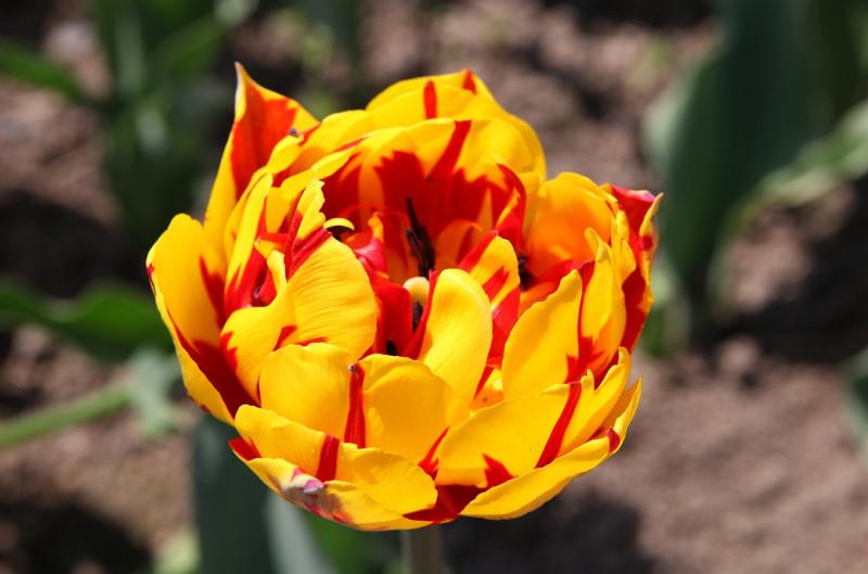 Солнечный арбузик