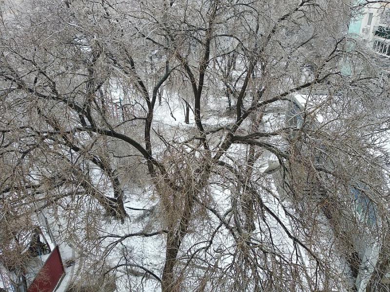 Вот как ни странно, но ! С этого очень раскидистого дерева прямо напротив моего балкона не обломилось ни одной ( !!! ) веточки ! Частнику слева с соседними деревьями повезло гораздо меньше : он пилил дрова не один день.