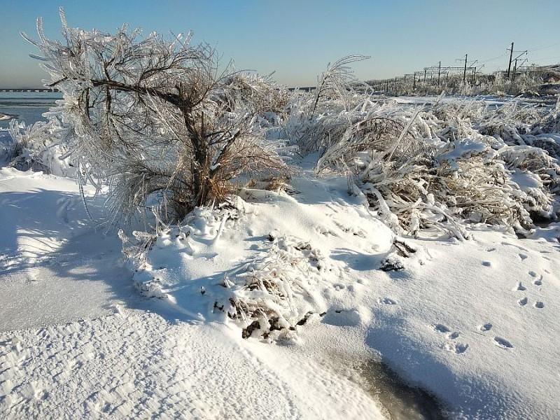 Маленькие деревья освободила ото льда вручную. Побоялась, что если выпадет ещё снег, то им вообще придёт кирдык.
