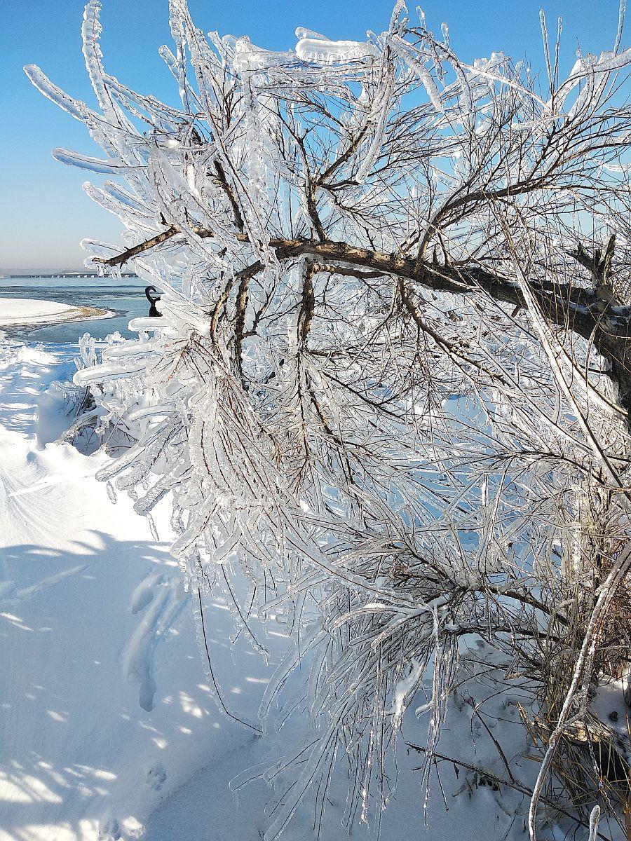 Здесь на ветках толщина льда уж явно больше официальных 12 мм... раза в два, я бы сказала.