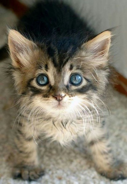 5916a2995d332b0636ef2ef2493a22a9--cat-s-kitty-cats