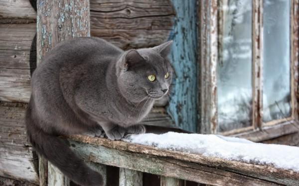 cat_snow_window_sill_sitting_waiting_40199_1440x900