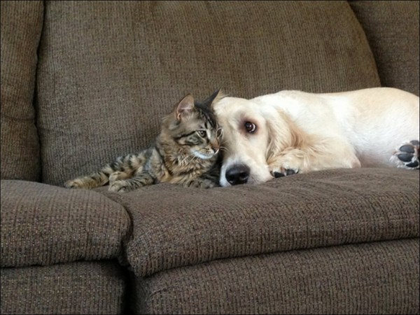 cats-and-dogs-002