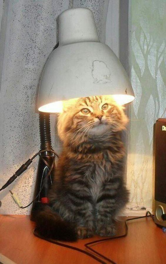 funny-cat-283-38