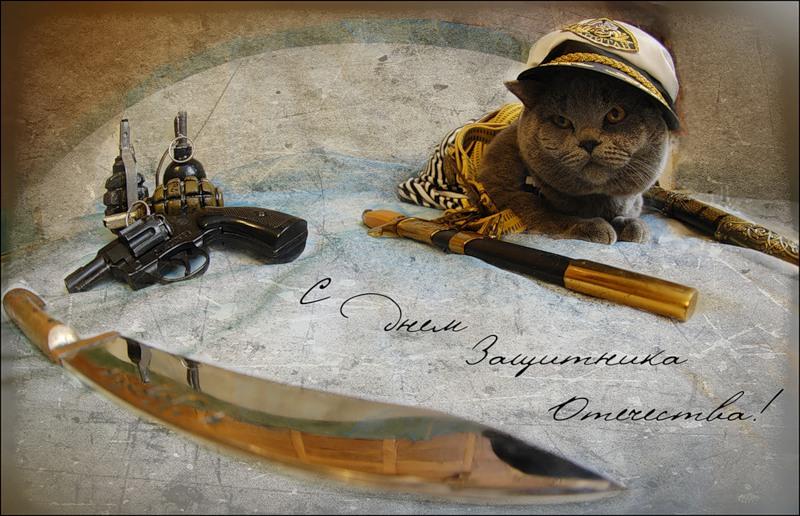 картинки кошки с днем защитника отечества нечто