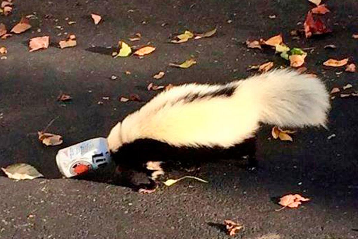 skunk-beer-can-miami-university-ohio