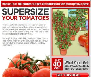 Tomato Spam