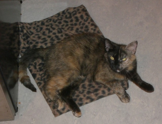Josie on her blanket