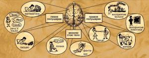 cerebral-hemispheres