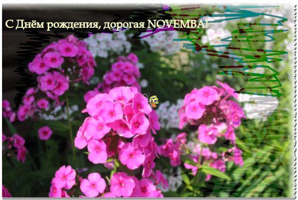 Novemba-.jpg