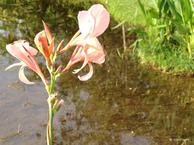 the flower basking in the sunlight