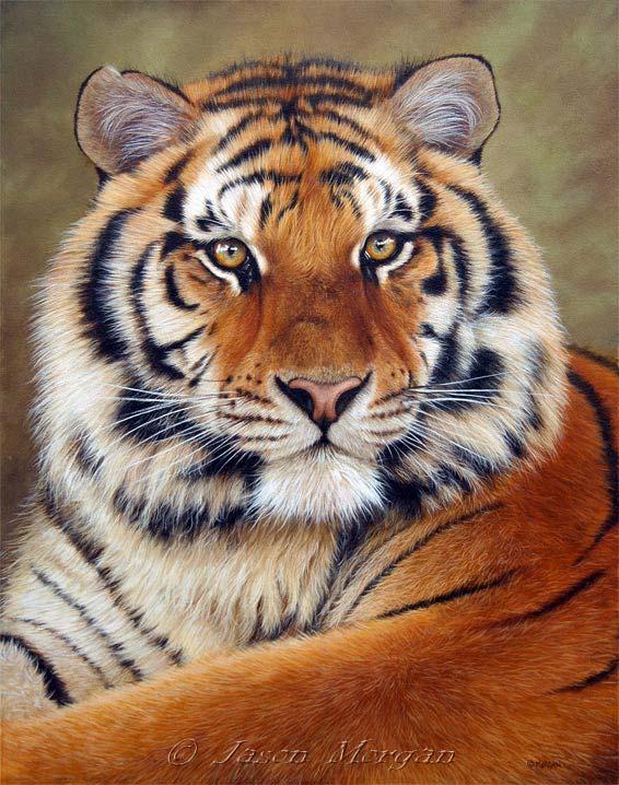 tsiberian-tiger-6