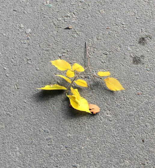 Осенняя забастовка