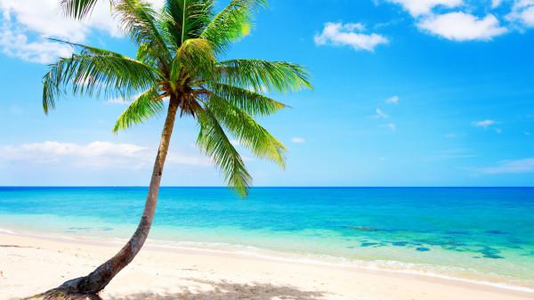 Lonely-palm-tree-tropical-beach-coast-sea_2560x1440
