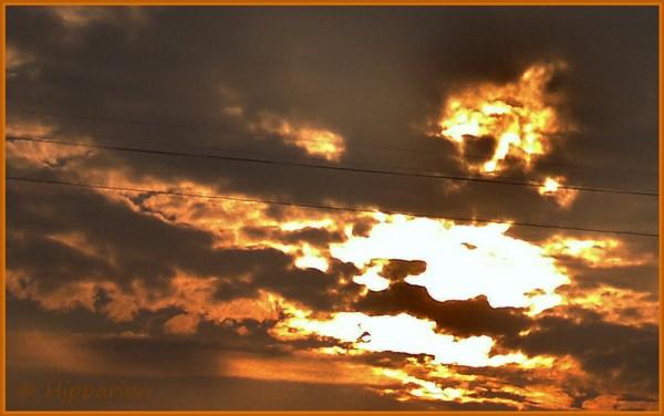 Солнечный-лис-18.10.15