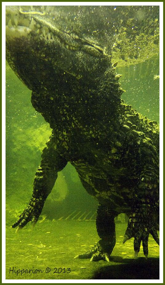 Крокозавр